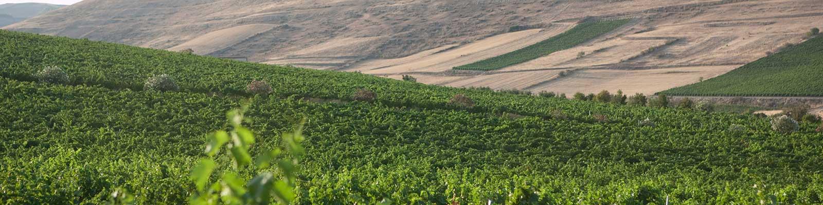 Contact | Wine Academy Italia