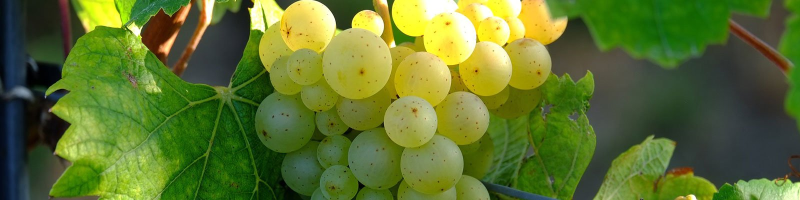 WSET Level 3 | The Wine & Spirit Education Trust