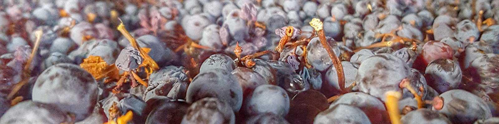 FAQs | Wine Academy Italia