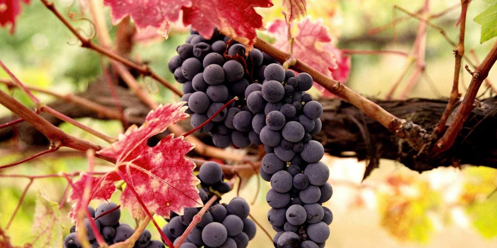WSET Courses in Italy with Wine Academy Italia