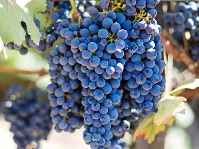 WSET Level 2 Award in Wine
