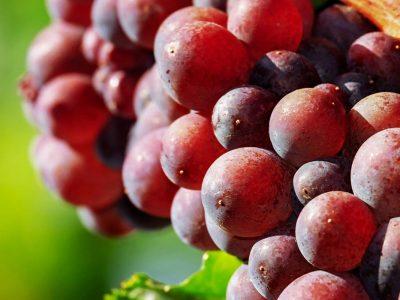 WSET Level 2 Award in Wine – Online