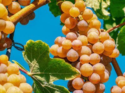 WSET Level 3 Award in Wines – Online
